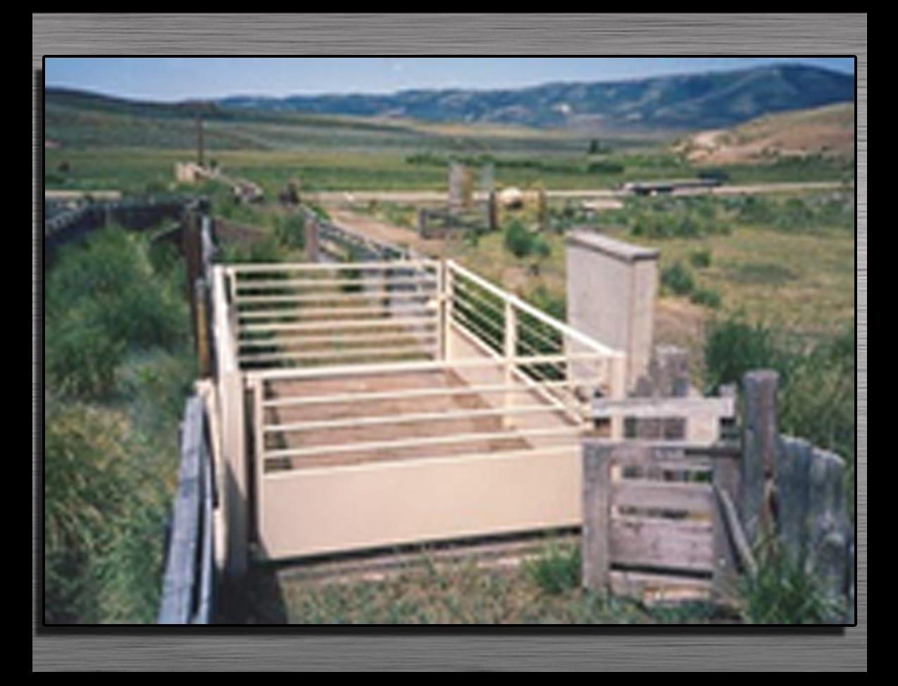 livestock-scale
